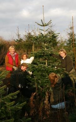 Fæld-selv-juletræer